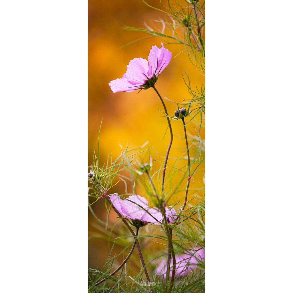 Fleur verticale