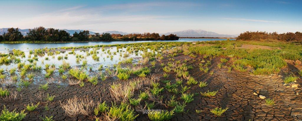 Marais à Canet en Roussillon